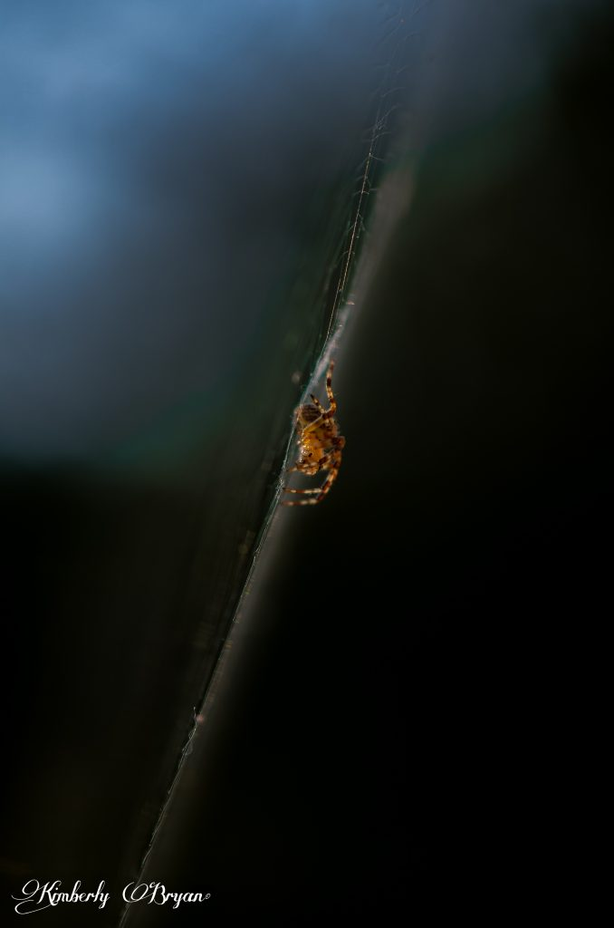 Spider in Macro on his web photographed from the side.