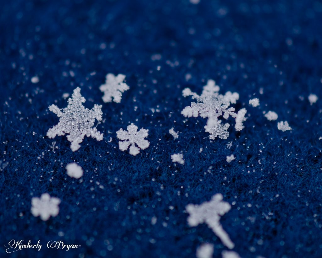 A variety of different shapes in this photo.From tiny crystal flower shapes to large six sided Lacey snowflakes.