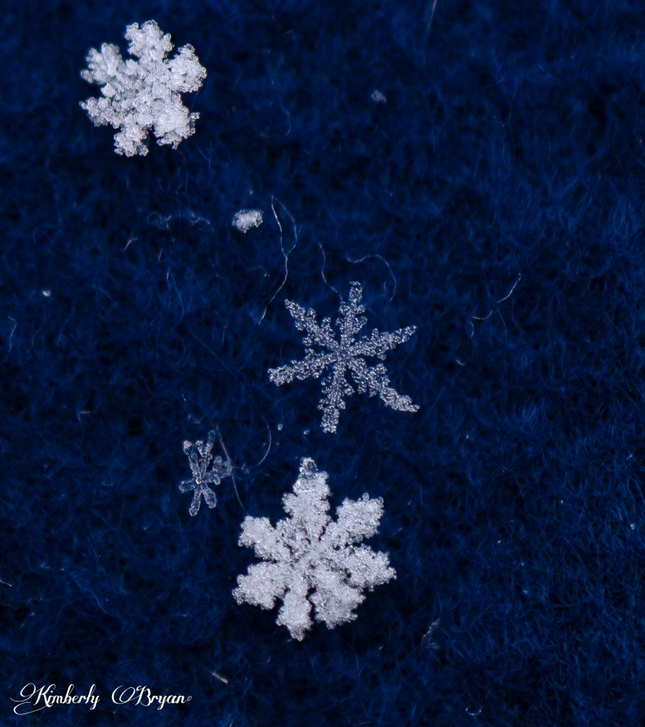 So many different snowflake shapes this day. Some you could see the rainbow colors shining through.