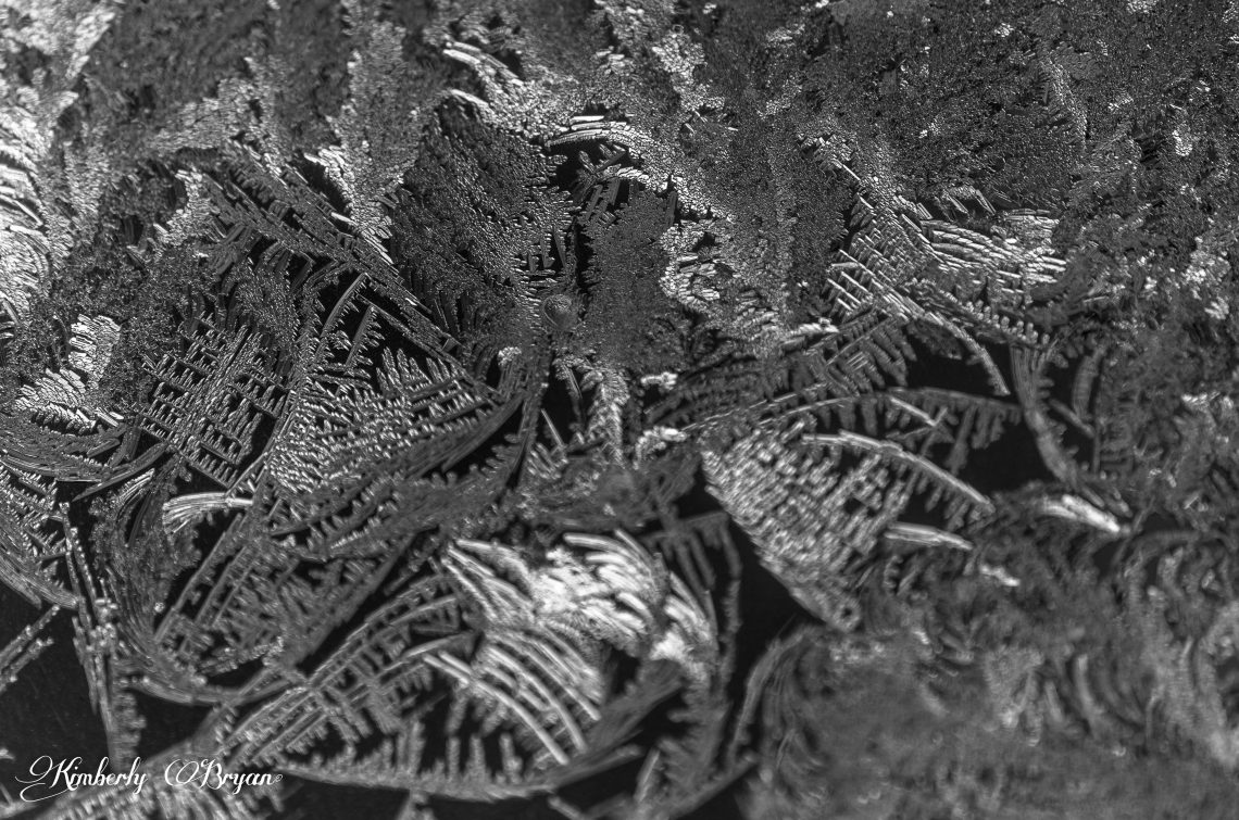 A close up macro photo of frost on my windows, in black and white. Up close it's looks like fern leaves.