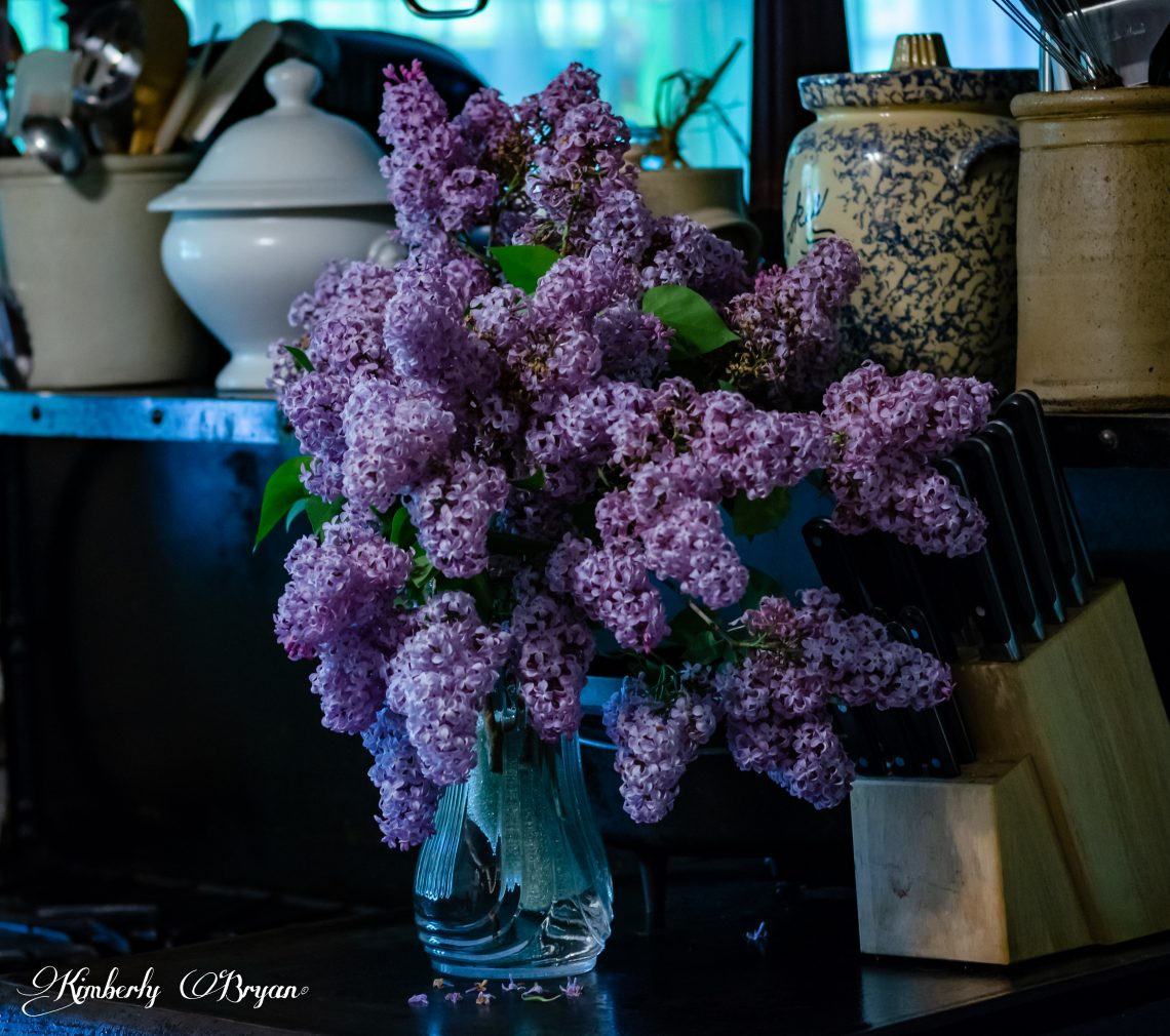 You are looking at a bouquet of lilacs that I will be using to make the lilac jelly with vanilla bean.
