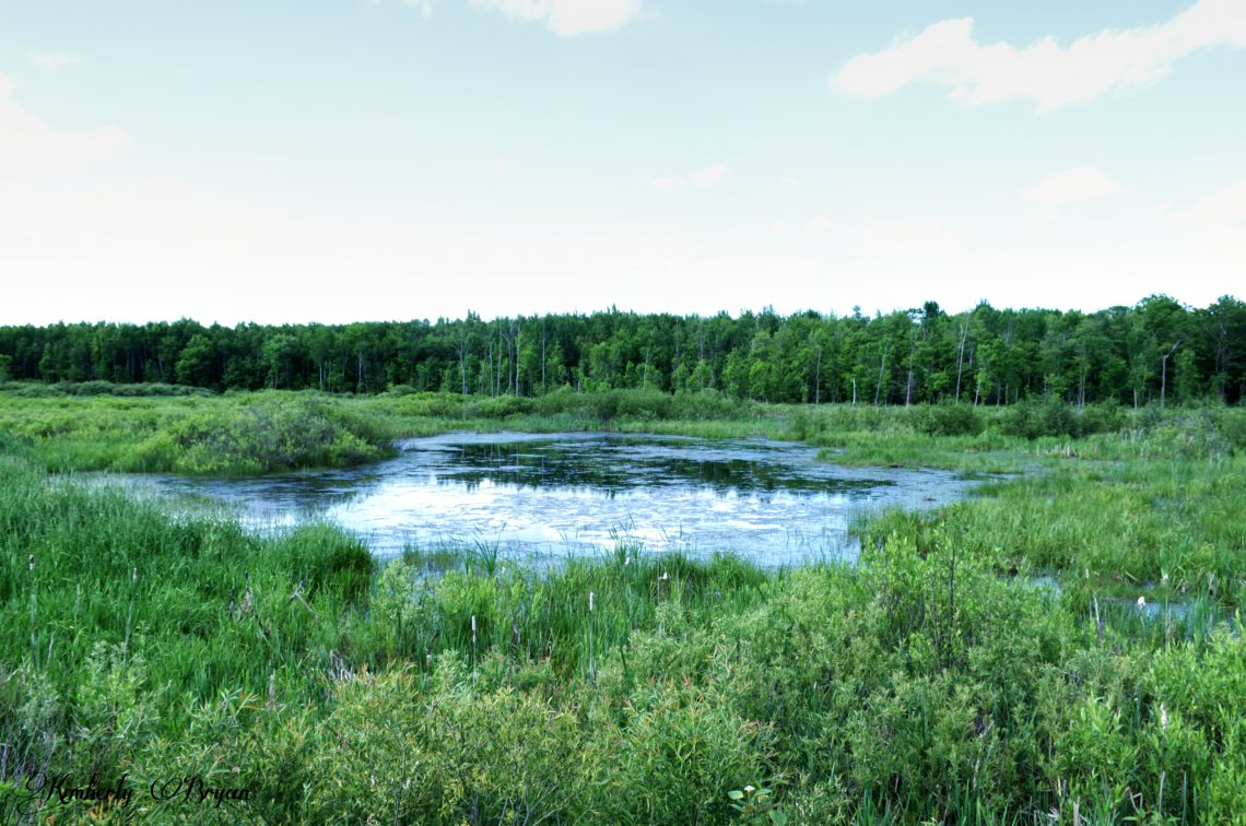 You are looking at one of the ponds that you pass by on the Mountain Bay Trail.