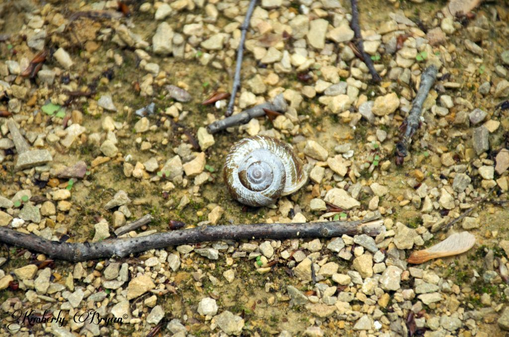 You are looking at an empty snail shell, along the wetland.
