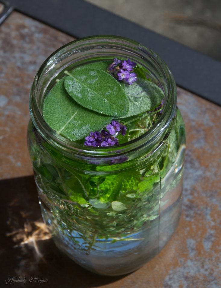 You are looking at how to make herbal tea from your garden. I placed freshly cut sage, lavender, lemon balm, oregano and lemon thyme. In a quart mason jar, filled with water.