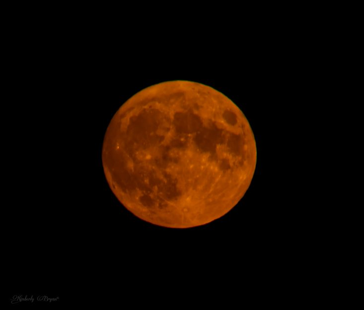 You are looking at the August Sturgeon Moon. It's big, bright and very orange. Reminds me of fall and pumpkins.