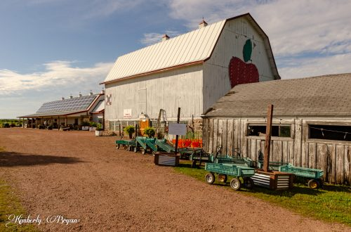 You are looking at the entry way into Helen's Apple Orchard near Merrill, Wisconsin. I go there every year to pick my own apples and pumpkins. This photo is from my post, Apple Orchards are in full swing.