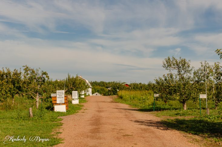 You are looking at the path way to the apple picking area. Helene's Apple Orchard Barn is in the back ground along with info sings, about honey bees. This is from my post Apple Orchards in Full Swing.