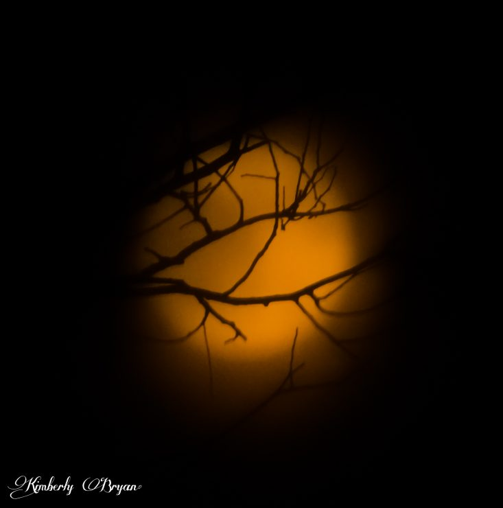 You are looking at the Full Moon faded out through tree branches. I love these types of night shots. When the camera is focused on the branches in the dark, with bright orange moon glow in the back ground. Taken on 11-11-2019