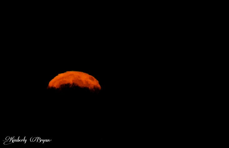You are looking at the Full Beaver Moon just rising up over the horizon. This was taken on 11-12-2019. It's much brighter and more orange in color. This is from my post, The Full Beaver Moon 11-11-2019.