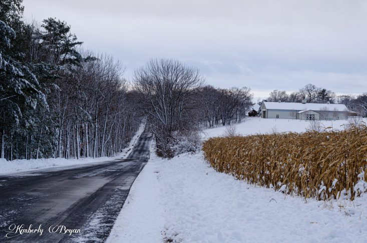 You are looking at a Horse Ranch Barn covered in the fresh fallen snow. With a field of corn that never got harvested. This is from my post, The Day Before Thanksgiving..
