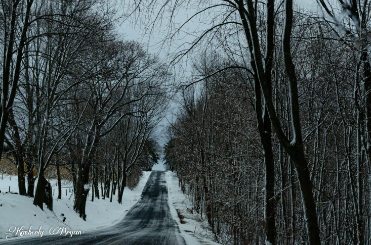 "You are looking at what we call a ""Tree Tunnel"". Were the trees are over the road and their tops over lap each other. One of my favorite areas near my town."