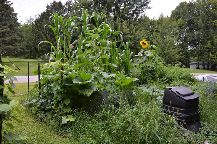 You are looking at a photo of my garden, theirs corn, sunflowers, zucchini and green beans. My dad's gardening green thumb rubbed of on me. I love growing things, thanks dad and Happy Father's Day!