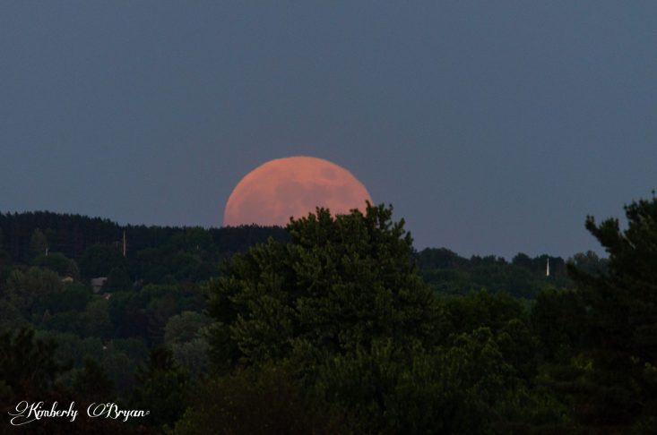 You are looking at the Strawberry Full Moon rising up from it's tree covered horizon. It moves so quickly, I have to continually re-adjust my camera to keep it in view. The moon was a big ball of orange.