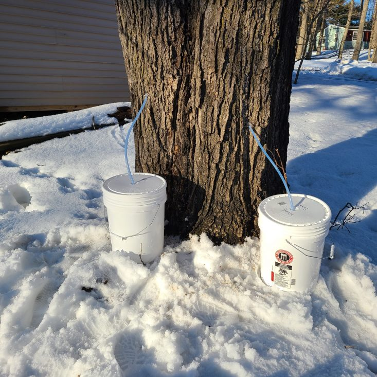 You are looking at two five gallon buckets that have been set up to collect maple sap. I love Maple Tapping time in Central Wisconsin