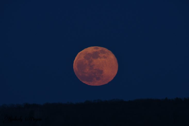You are looking at the May's Blood Flower Moon. It's the closest the Moon will have reached in 2021. It was very big to the eye and very orange/red in color.